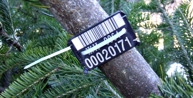 Лісгосп продав новорічних ялинок майже на 62 тис. грн.