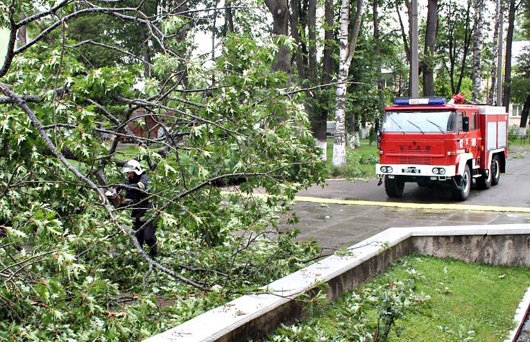 "Результат пошуку зображень за запитом ""рятувальники зрізали дерево"""