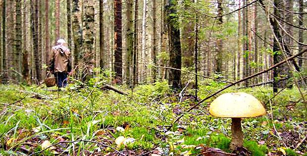 Обережно – гриби!