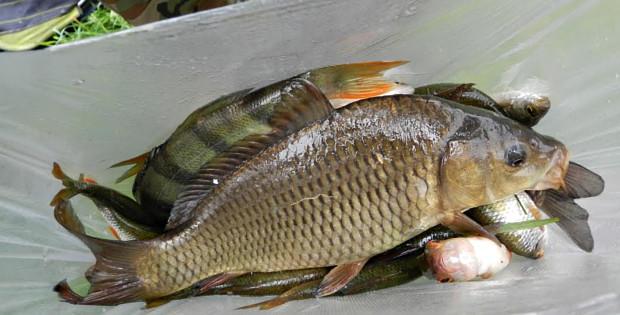 Змагання рибалок під егідою УТМР