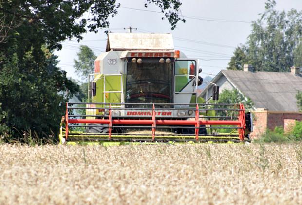 На полях району почали збирати пшеницю