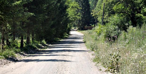 Лісові дороги в Банилівському лісництві
