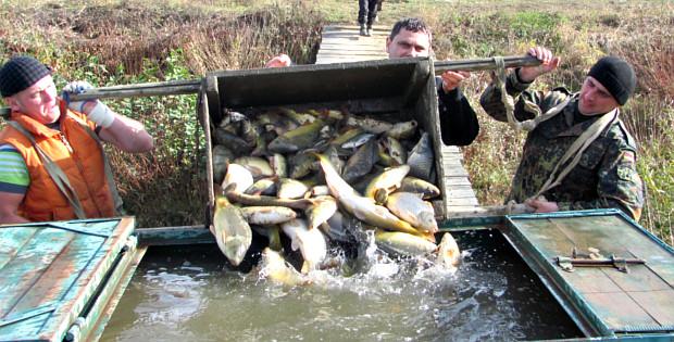 Розведення риби – це важка, але цікава праця