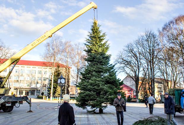 В центрі Сторожинця встановили 10-метрову ялинку