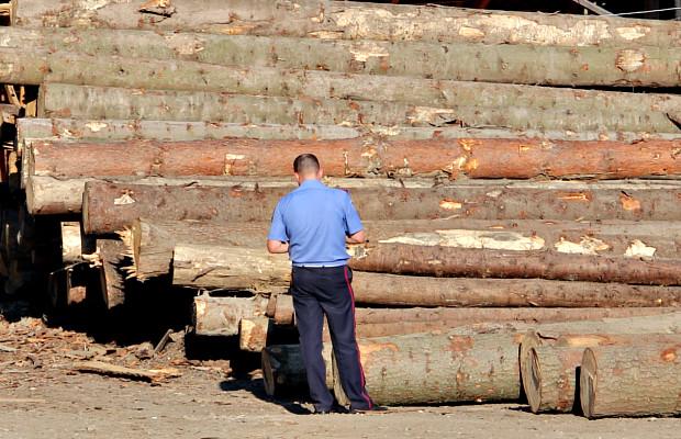 Завдяки пильності громадян виявили підозрілу деревину