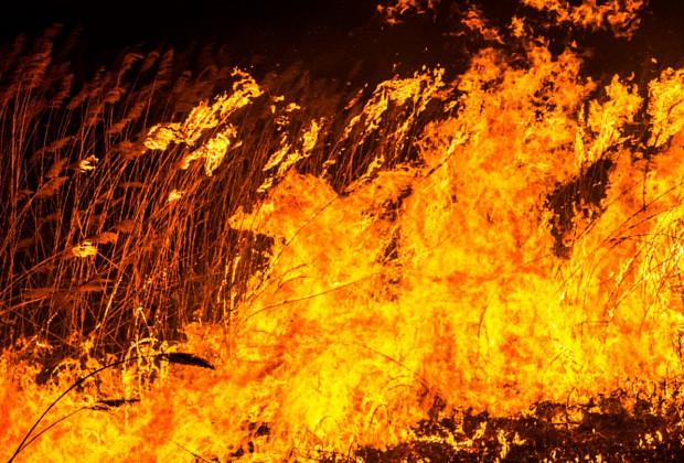 Спалювання сухої рослинності