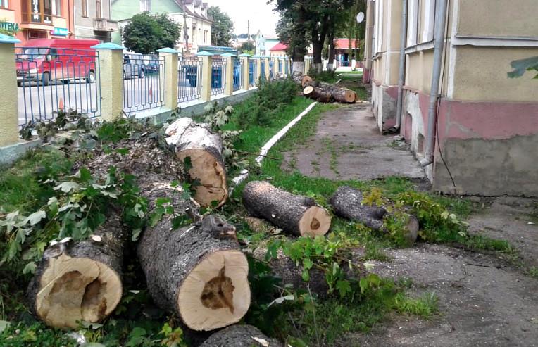 Зріз дерев біля лікарні