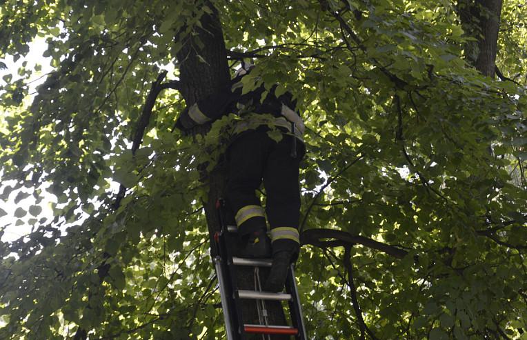 Прикарпатські «надзвичайники» рятували кошеня, яке застрягло між гілками дерева