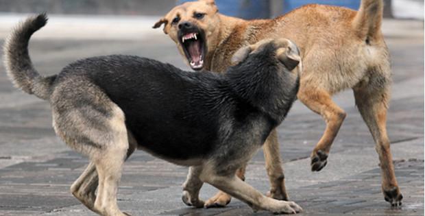 В Кам'яній чоловіка покусав собака. Потерпілий помер в лікарні