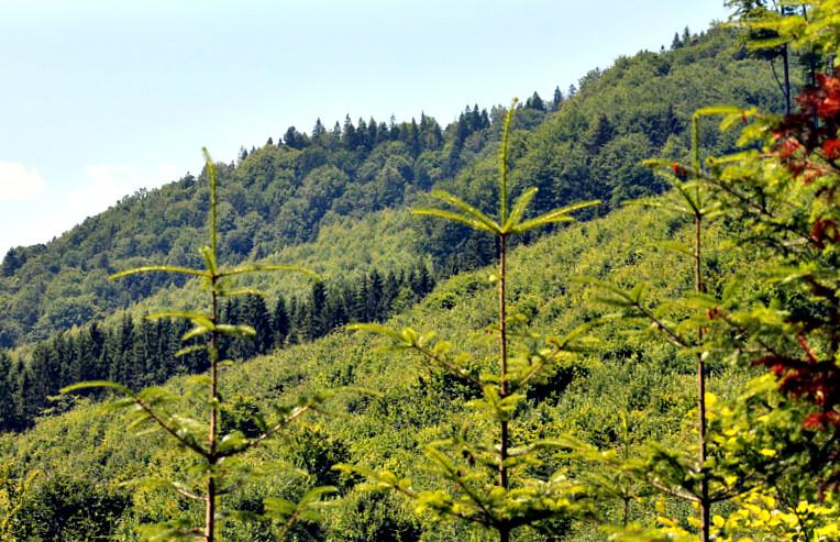 Лісомисливські господарства