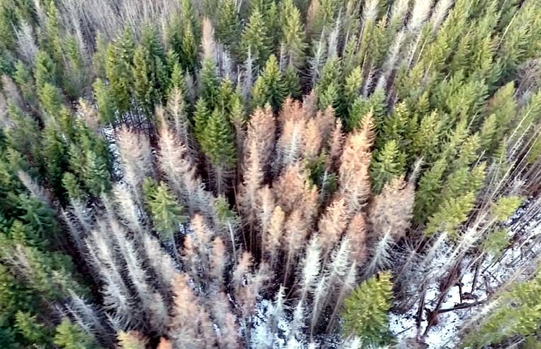 Безпілотний обліт лісу