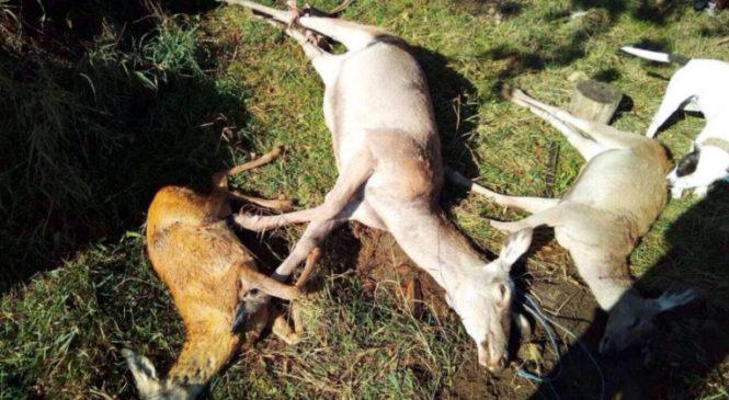 Мисливці Сторожинеччини! Дотримуйтесь вимог законодавства України про полювання!