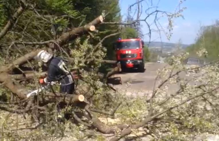 Впало дерево
