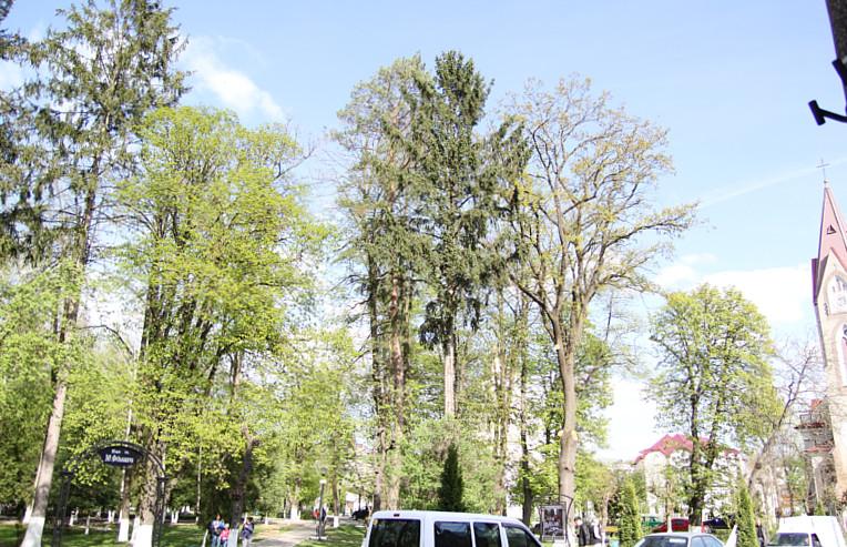 У Сторожинці з дерев зняли воронячі гнізда. Птахи не постраждали