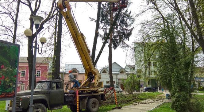 В парку ім. Ю. Федьковича зрізали аварійні дерева