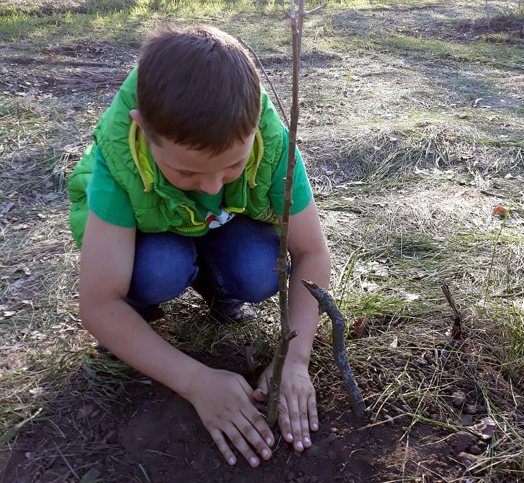 Посадили дуби