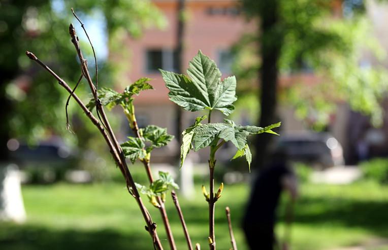 Висадили нові дерева