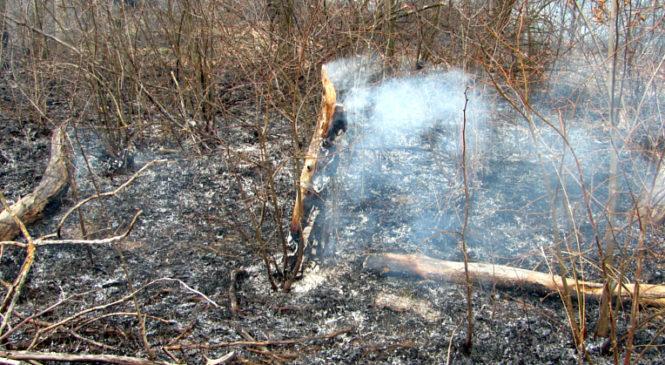 Сторожинецькі рятувальники закликають дотримуватися правил поведінки у лісі!