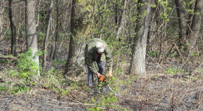 У Сторожинецькій громаді розпочалася осіння толока