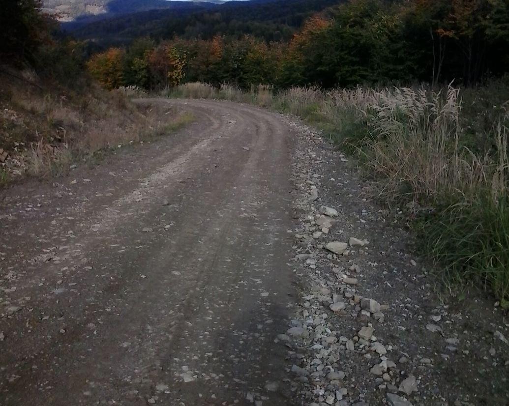 Лісові дороги