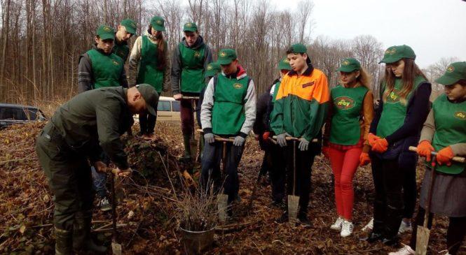 У Сторожинецькому лісгоспі Міжнародний день лісів відзначили посадкою лісу разом з учнями і студентами