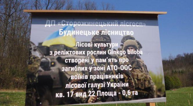 У Сторожинецькому лісгоспі висадили 400 дерев гінкго у пам'ять про лісівників, що в боях у зоні проведення АТО-ООС віддали життя за Україну