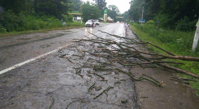 Дерево, яке впало на дорогу, стало причиною ДТП