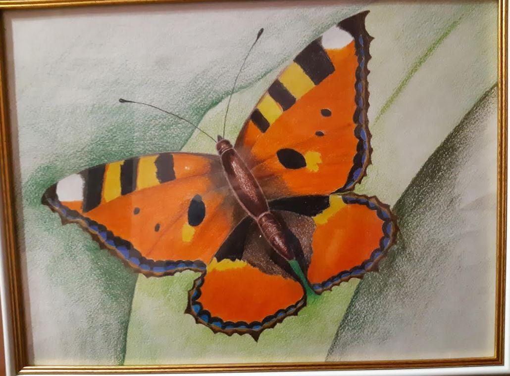 Метелики - німий шедевр природи